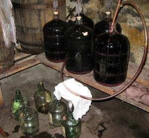 The wine is siphoned out of the carboys and into 1-gallon jugs below.